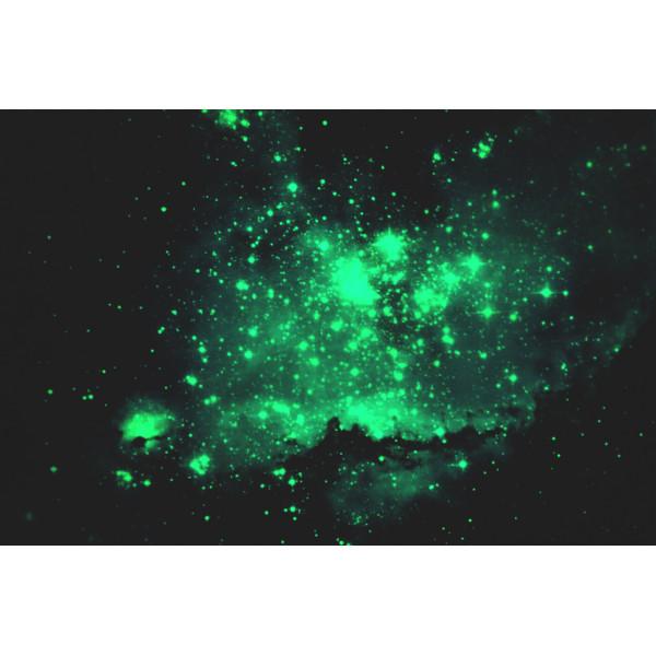 Светящаяся картина Звездное небо «Люми-Зуми» формата А3